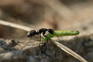 アリの歩くスピード