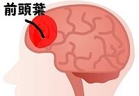 脳の前頭葉