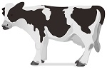 じっと動かない牛