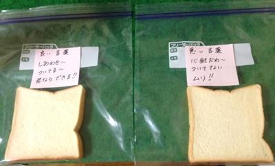 言霊実験用の食パン