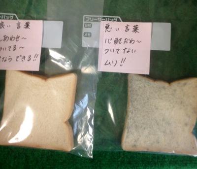 言霊実験18日目の食パン