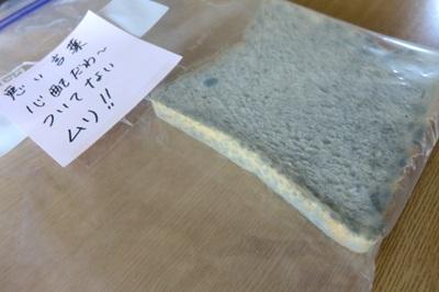 言霊実験24日目のカビた食パン
