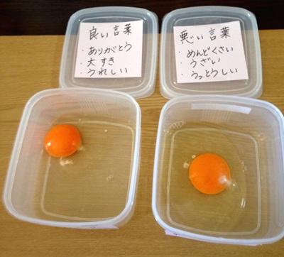 言霊実験用の生卵