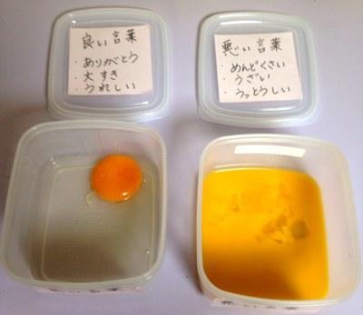 言霊実験7日目の卵