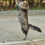 【猫背を治す方法】姿勢が良くなるシンプルな習慣