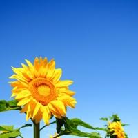 ネガティブな性格を改善する7つの方法