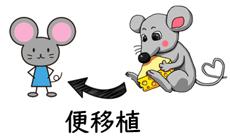 マウス実験②