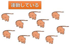運動しているネズミ