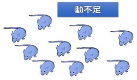 運動不足のネズミ