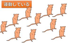 ストレスに強いネズミ
