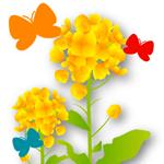 花に集まる蝶