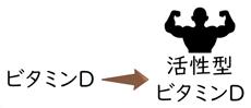 活性型ビタミンD