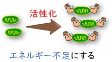 ミトコンドリアを活性化する方法